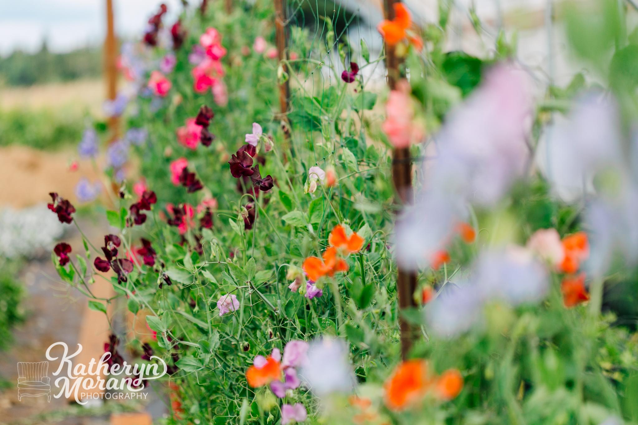 bellingham-photographer-triple-wren-farms-katheryn-moran-photography-summer-2018-458.jpg