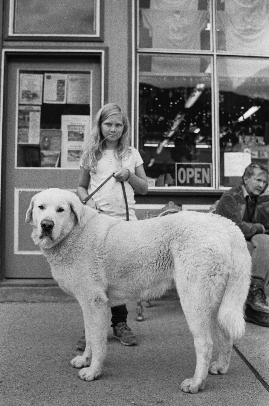 ^ Grace and a stranger's horse-sizeddog. Silverton, Colorado.