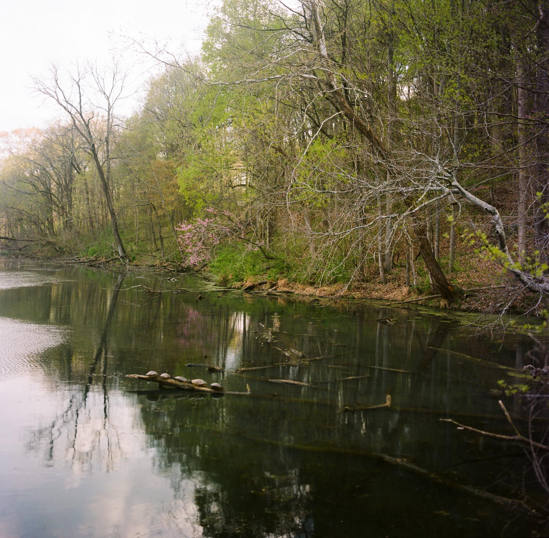 Radnor Lake State Park...home to prehistoric dinosaur turtles.