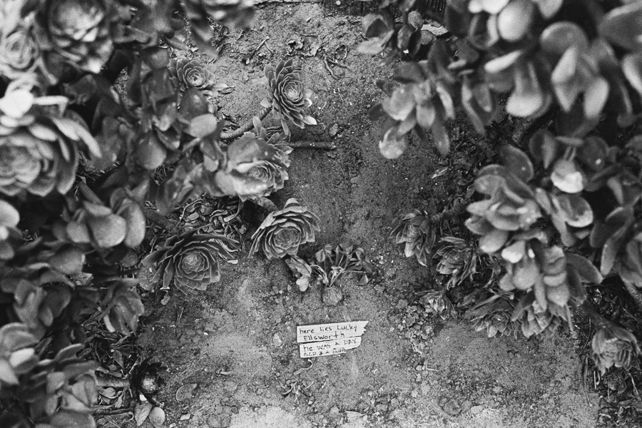 """^  """"Here lies Lucky Ellsworth. He was a day old and a bird"""" The final resting place of Lucky the lost baby bird the Ellsworths found the day before."""
