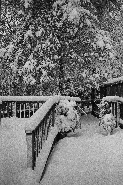 1.16_SNOWDAY_003.jpg