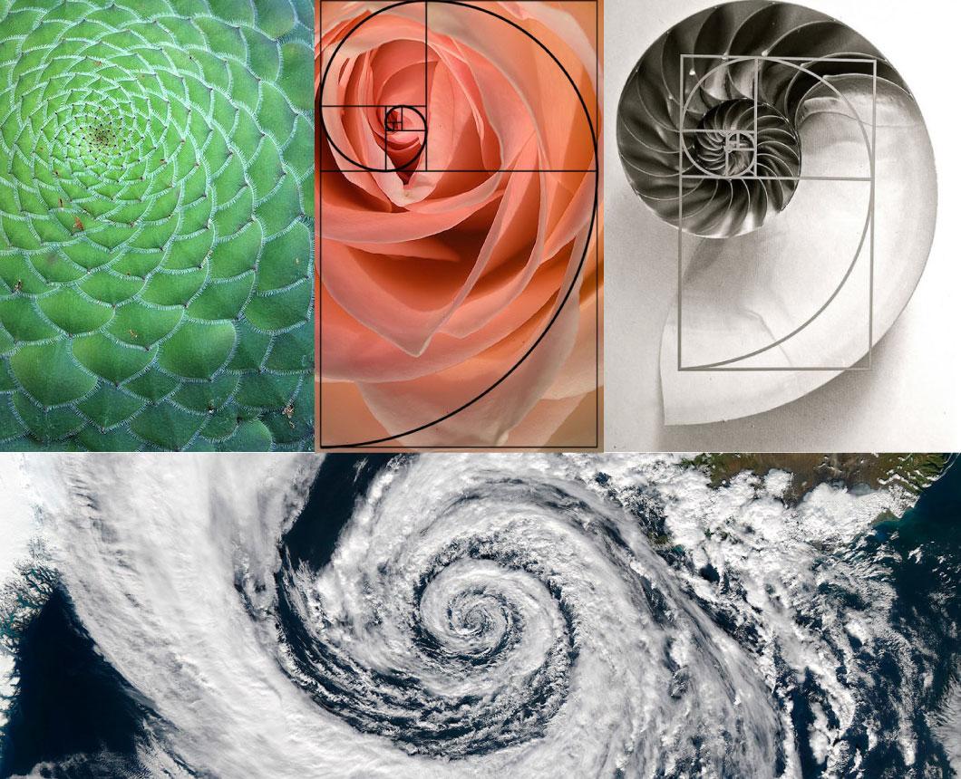 golden-spirals.jpg