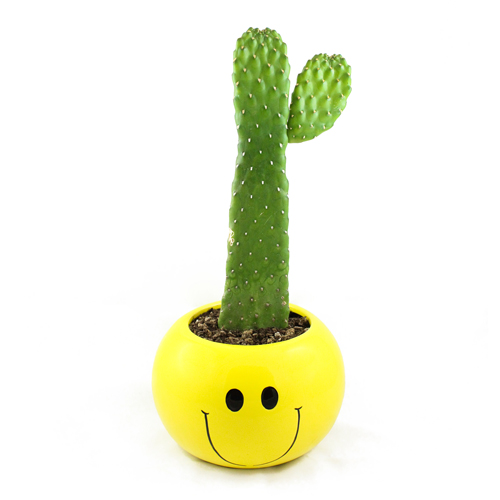 New favorite planter / cactus duo.