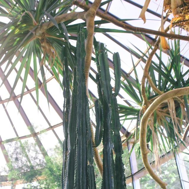 Cactus in the aviary.