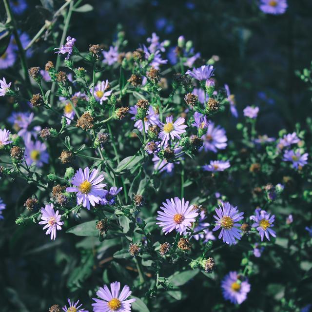 Purple Wildflowers, 3.