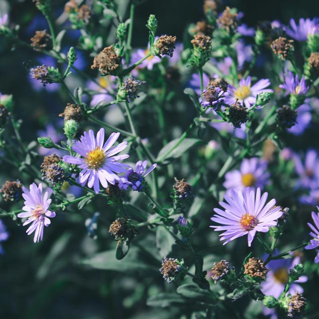 Purple wildflowers, 2.