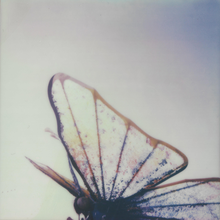 Polaroid of the butterfly