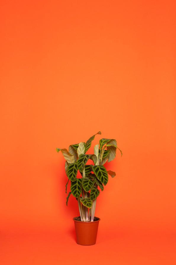 Workplace plants in the spotlight.