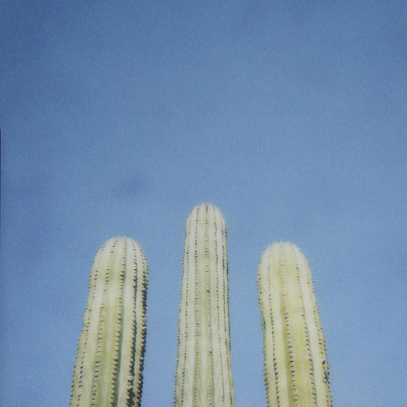 Cactus / Julia Walck