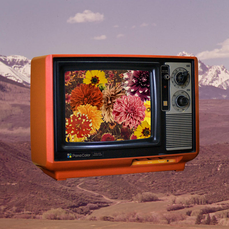 """Color TV"" (collage by me, original tv photo CC mxmstryo on Flickr)"
