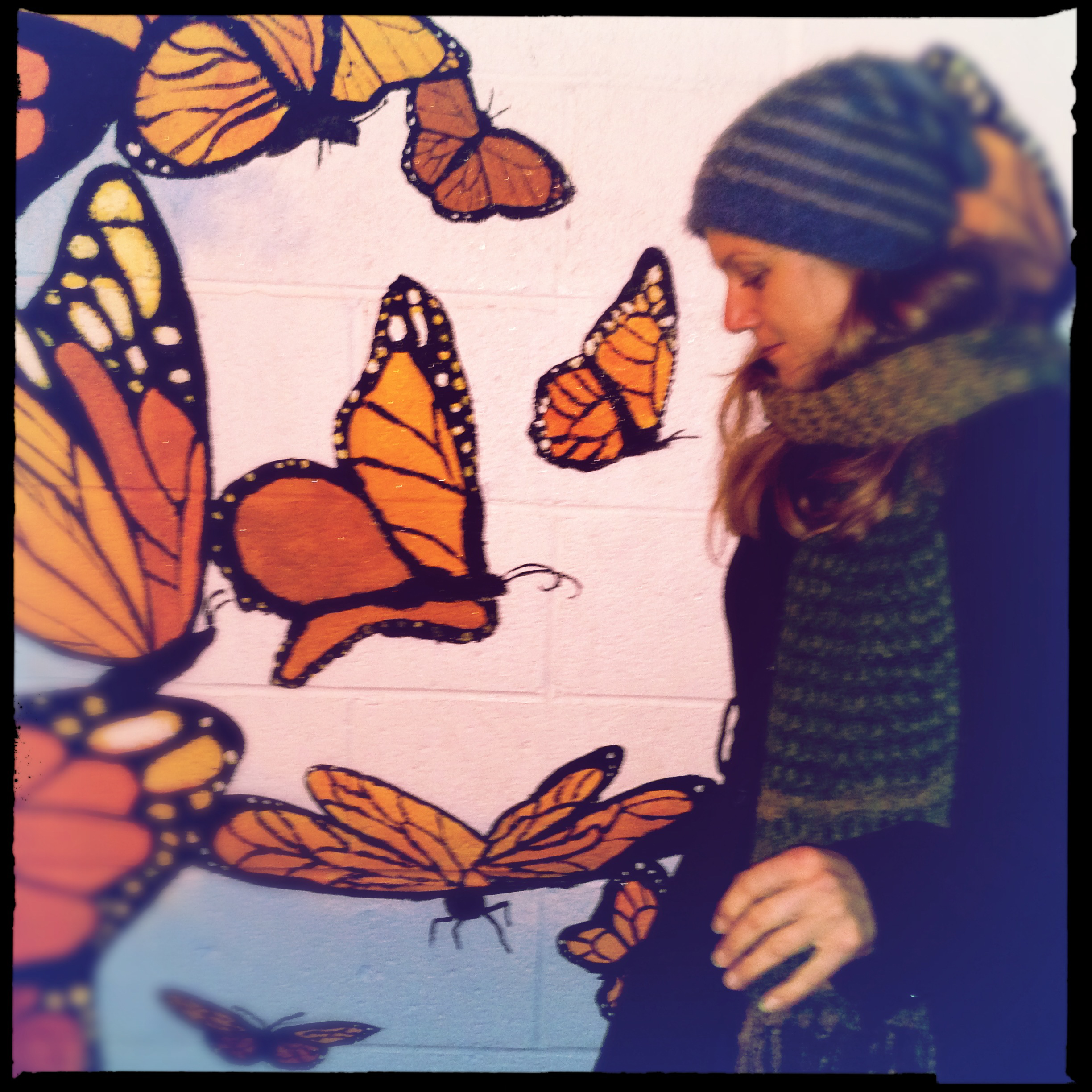 Butterflies With Z