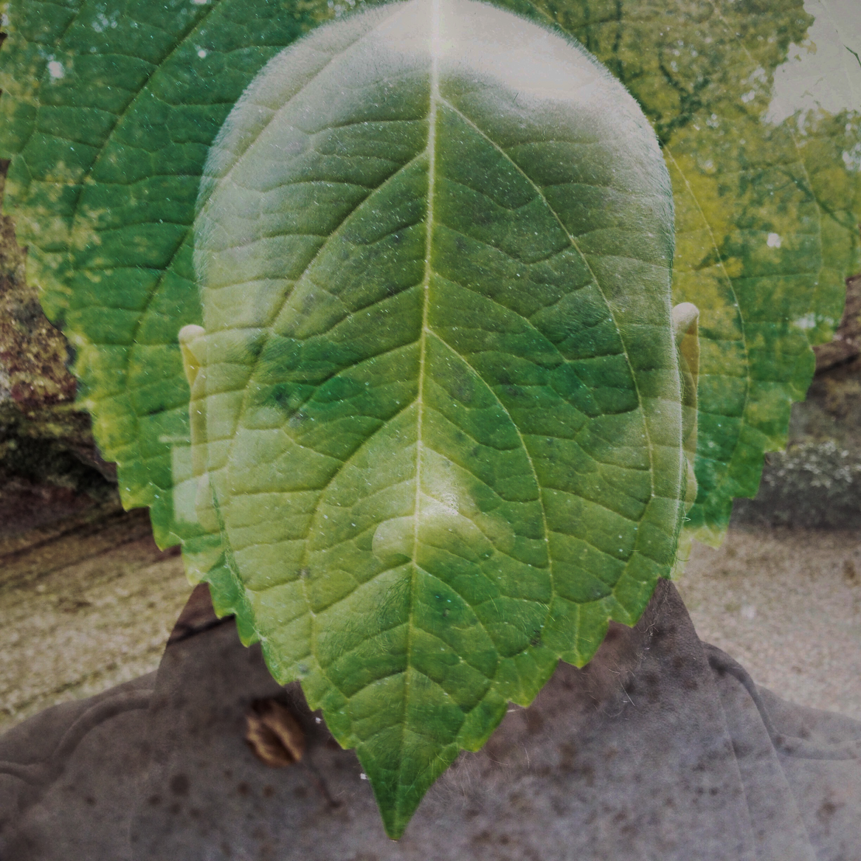 The Last Green Leaf of Fall