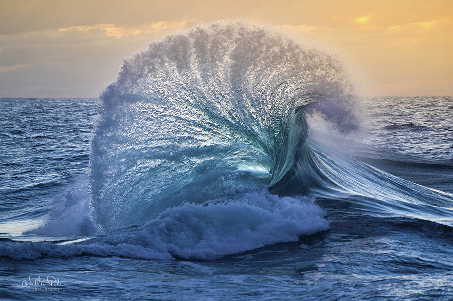 Image by Will Patino