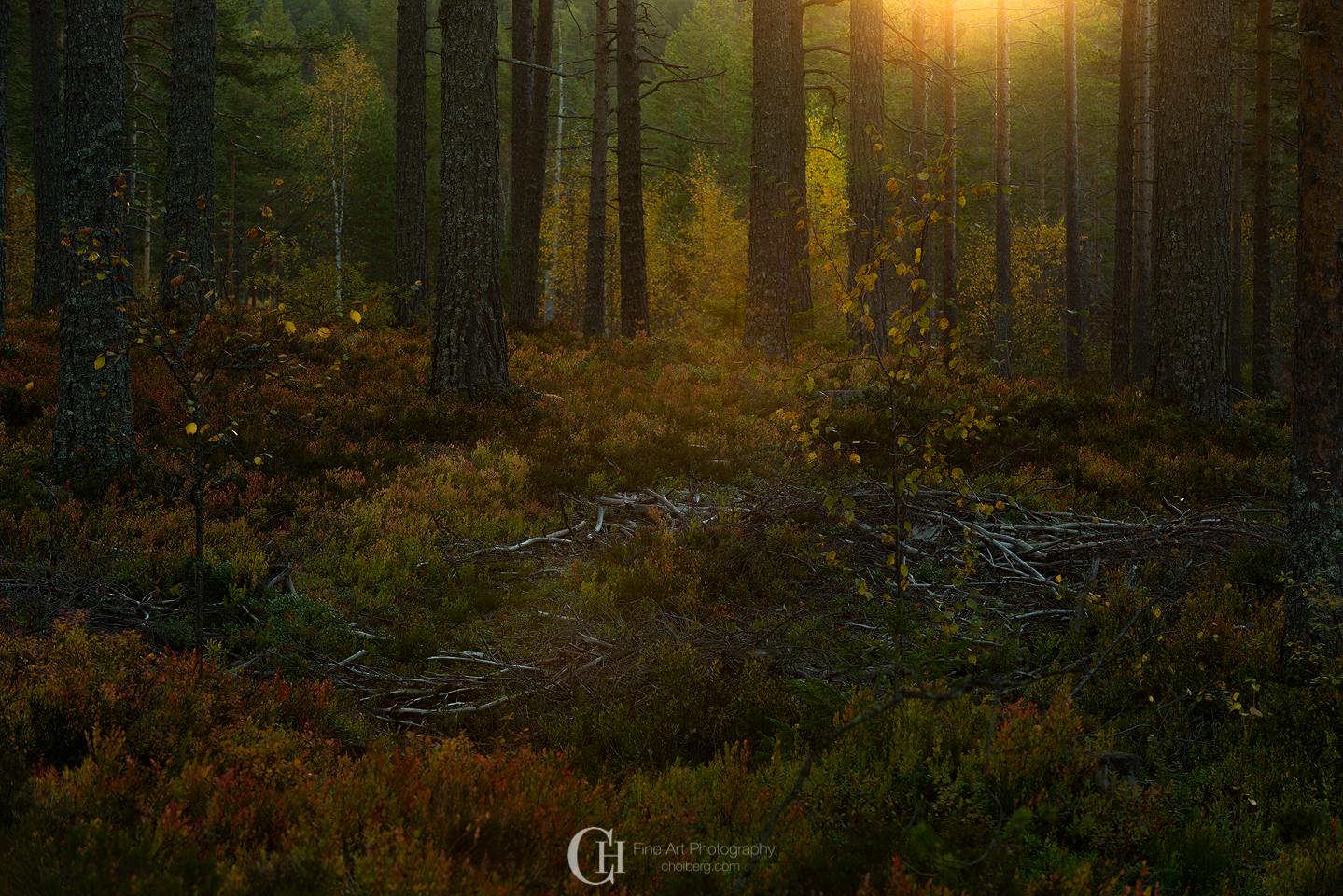 deep-woods-sunrise-oksne-fall.jpg