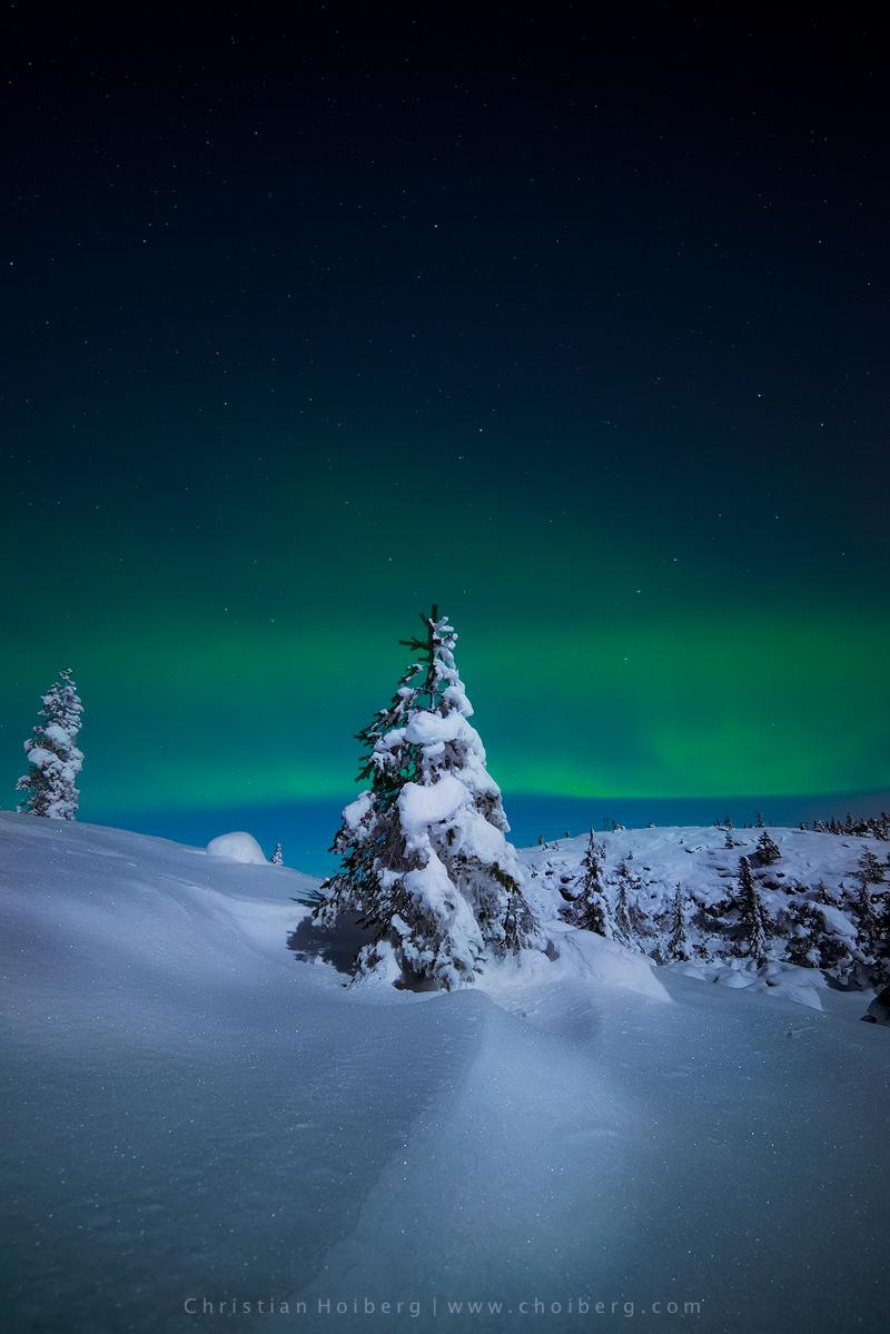 Knuten-nordlys-vertical.jpg