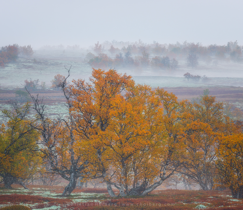 autumn-trees-fog.jpg