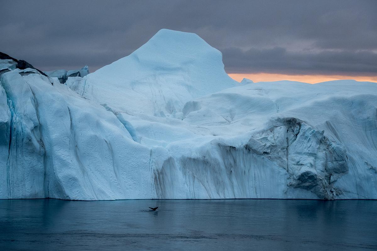 Ilulissat-Iceberg-Abstract-Whale-II.jpg