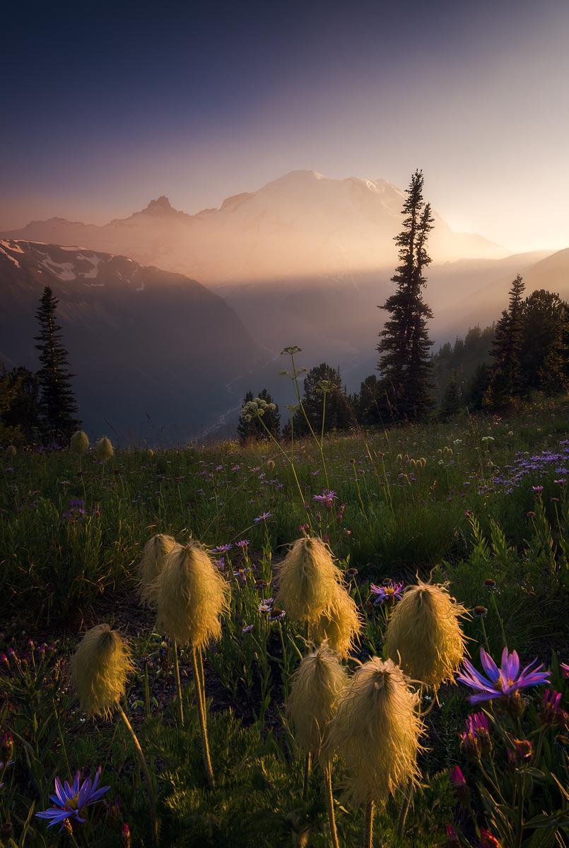 MtRainier-Wildflowers-Temp.jpg