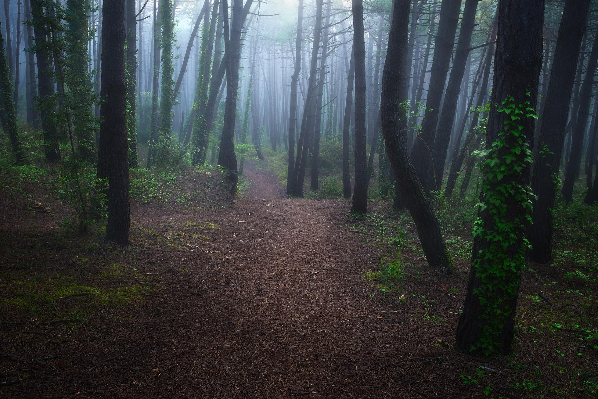 Liencres-foggy-woods.jpg