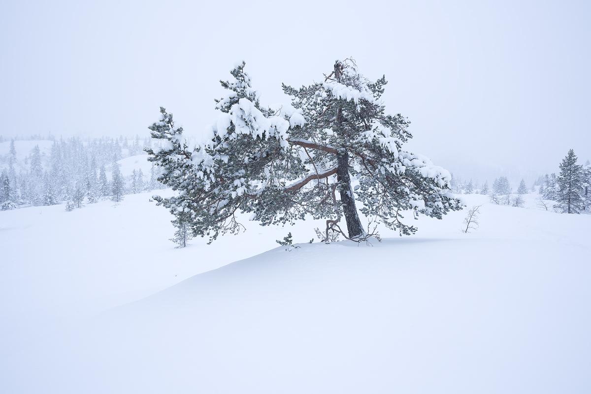 January -