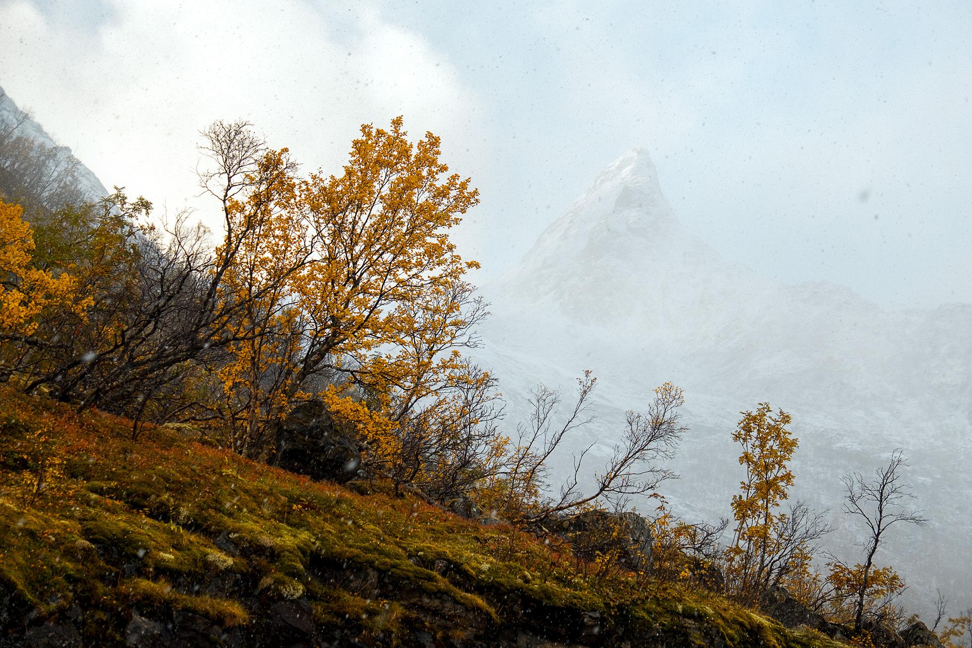 Senja-Autumn-Snow.jpg