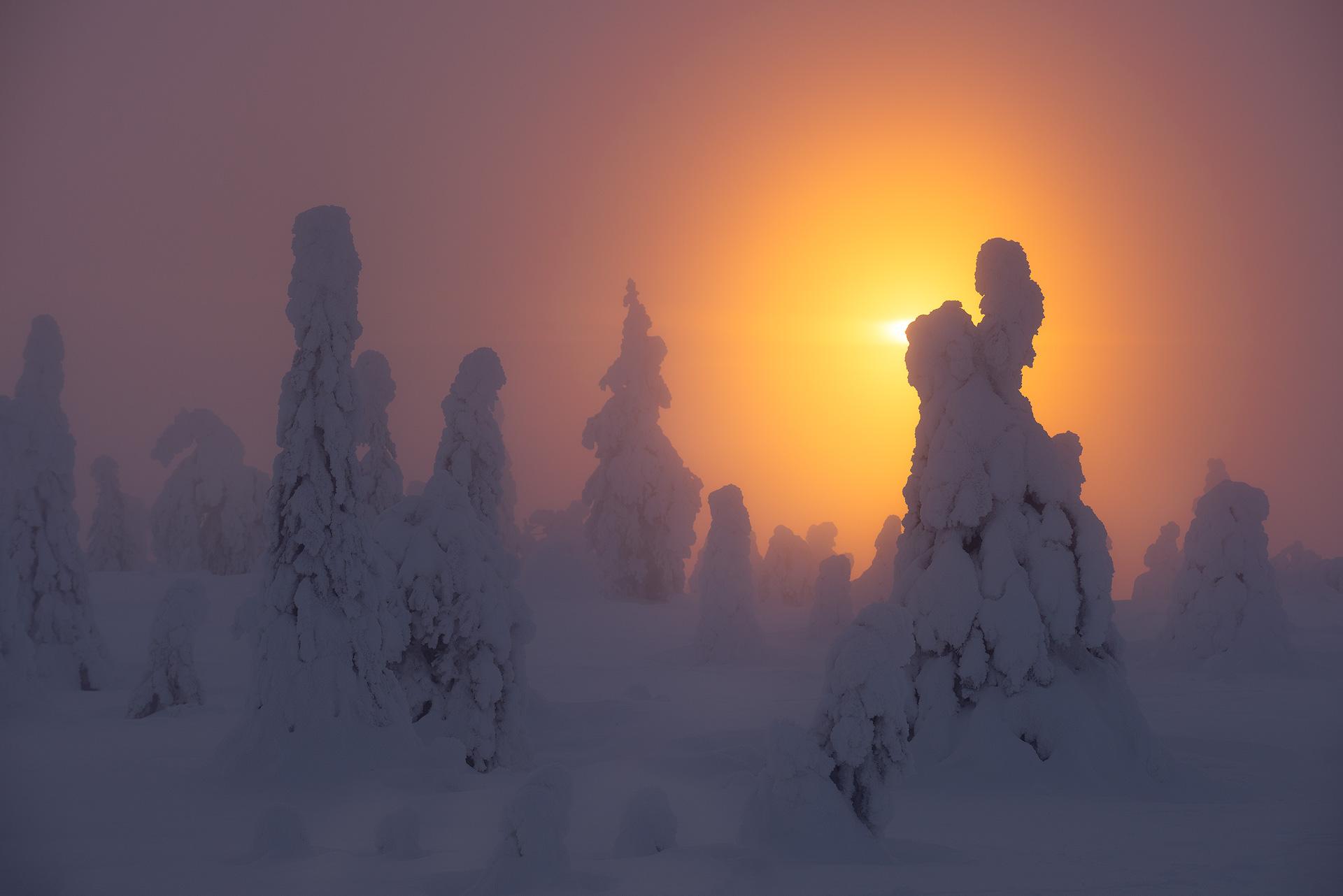 Diffused Winter II