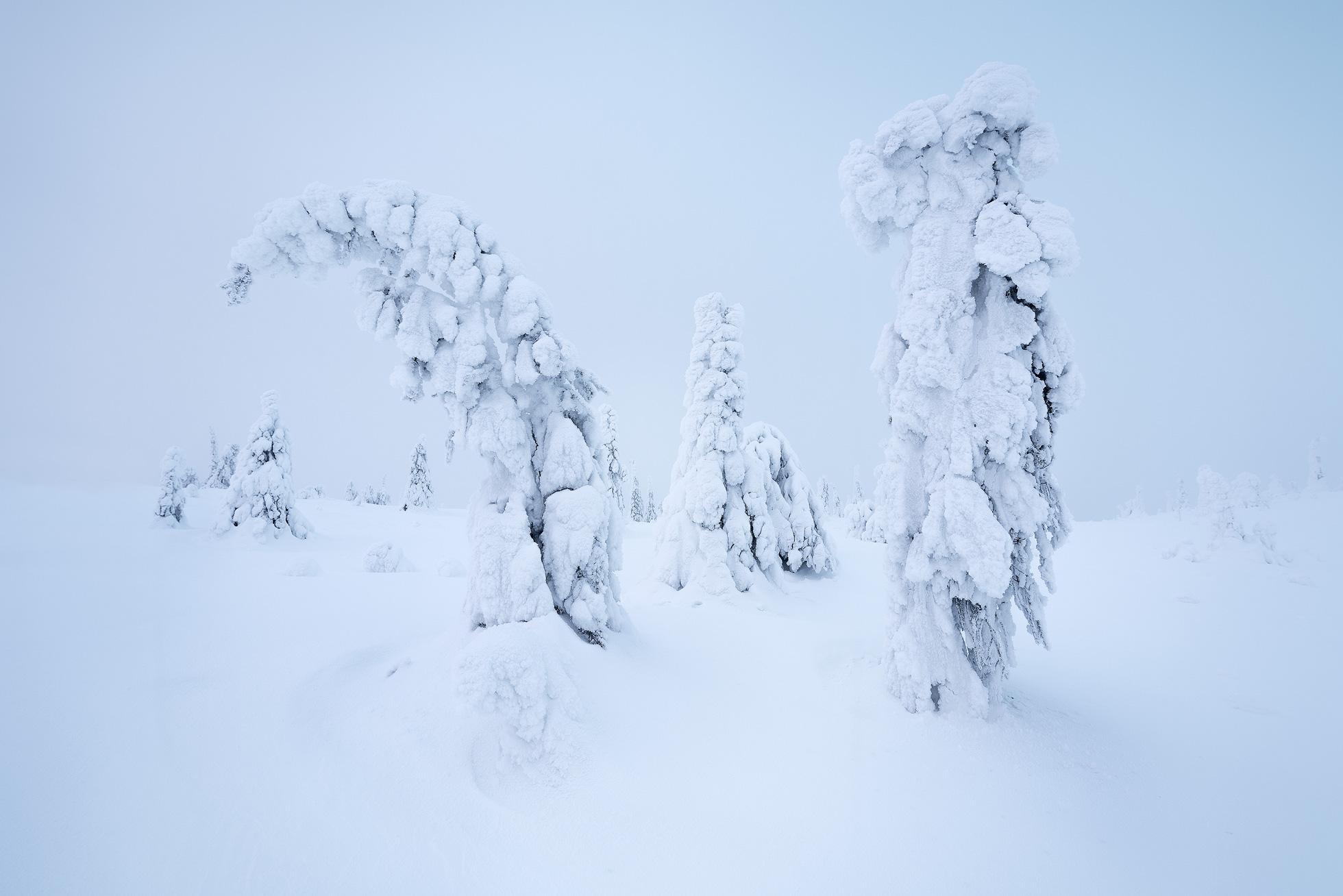 Arctic Aliens