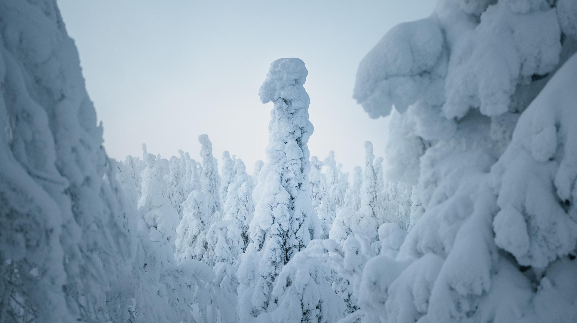 Winter's Troop