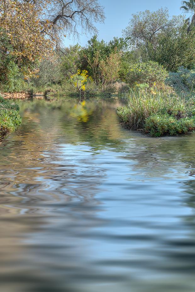 Rancho Santa Ana Botanical Gardens, Claremont, California.