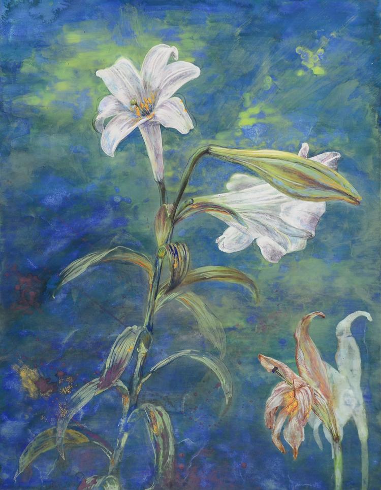 Lillies / ユリ