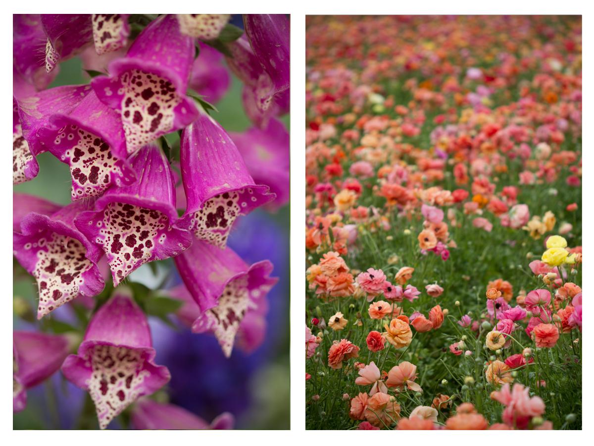 Flowers 9.jpg