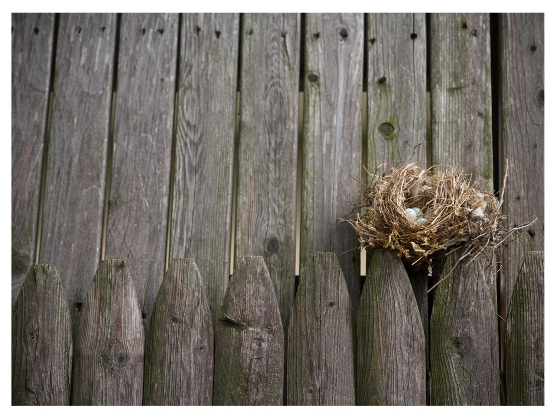 Birds-8.jpg