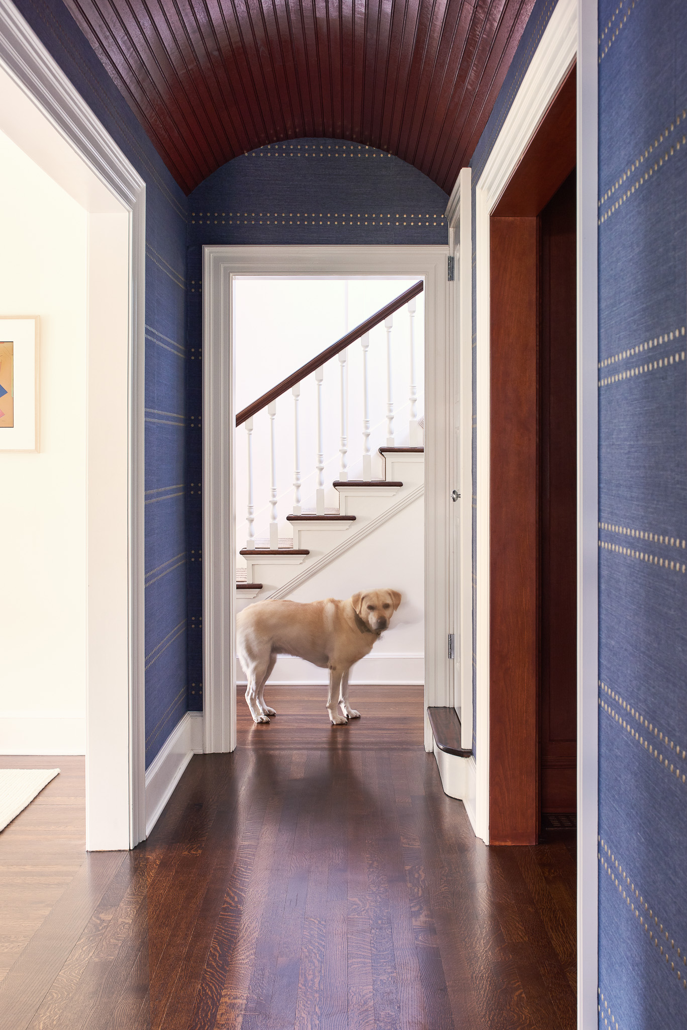 NCI Union Street_Blue Hall Dog_Web Ready-13.jpg