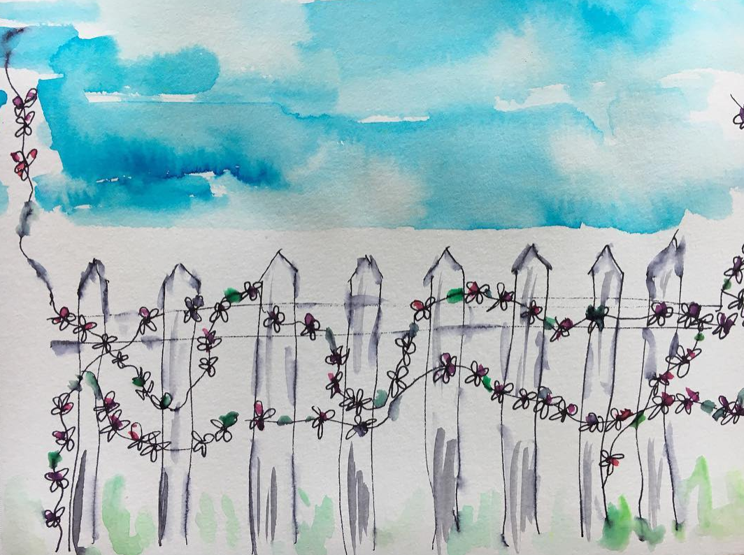 jasmine growing over a white picket fence with the blue skies and green grass around...