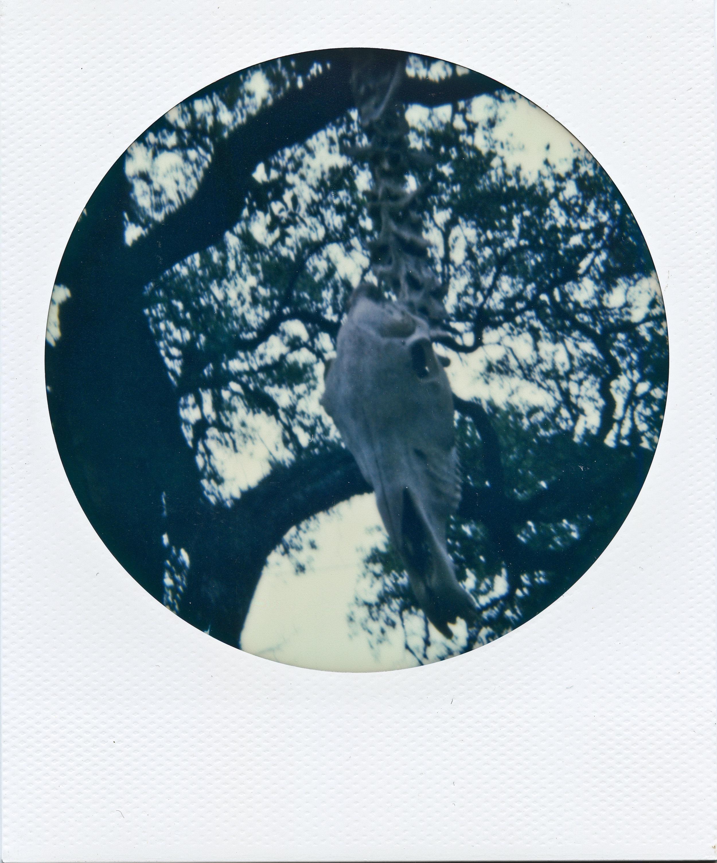 Polaroid ATX008-2.jpg