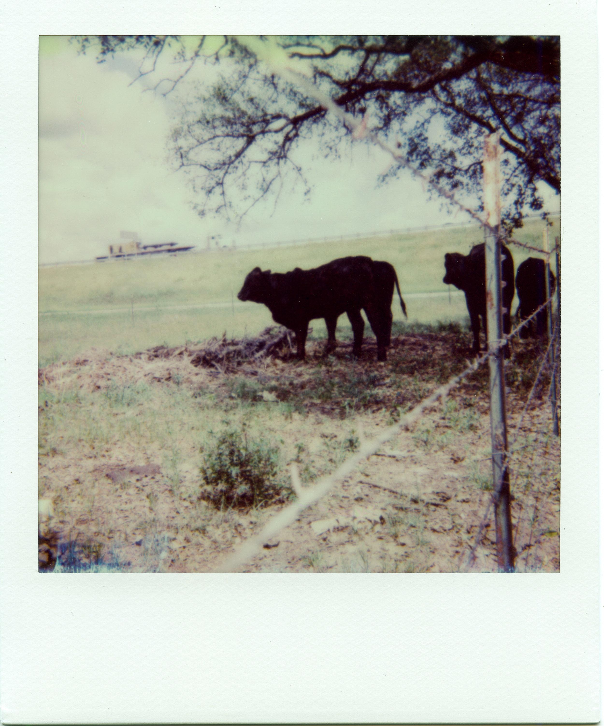 Polaroid ATX014-2.jpg