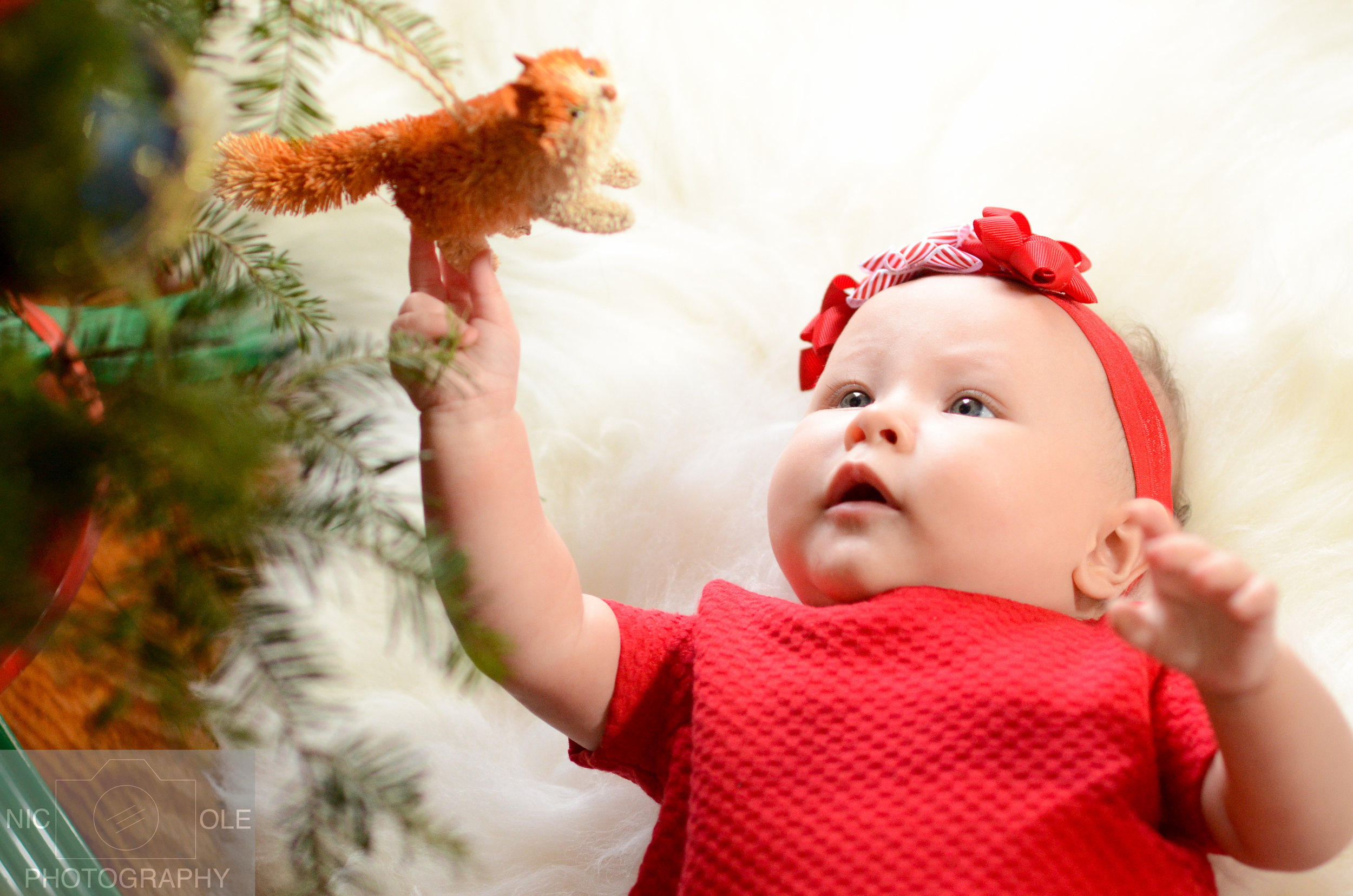 O&Z Christmas Photos- Nic.Ole Photography-4.jpg