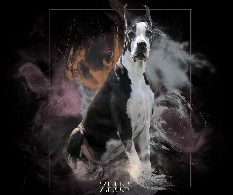 Zeuss-comp.jpg
