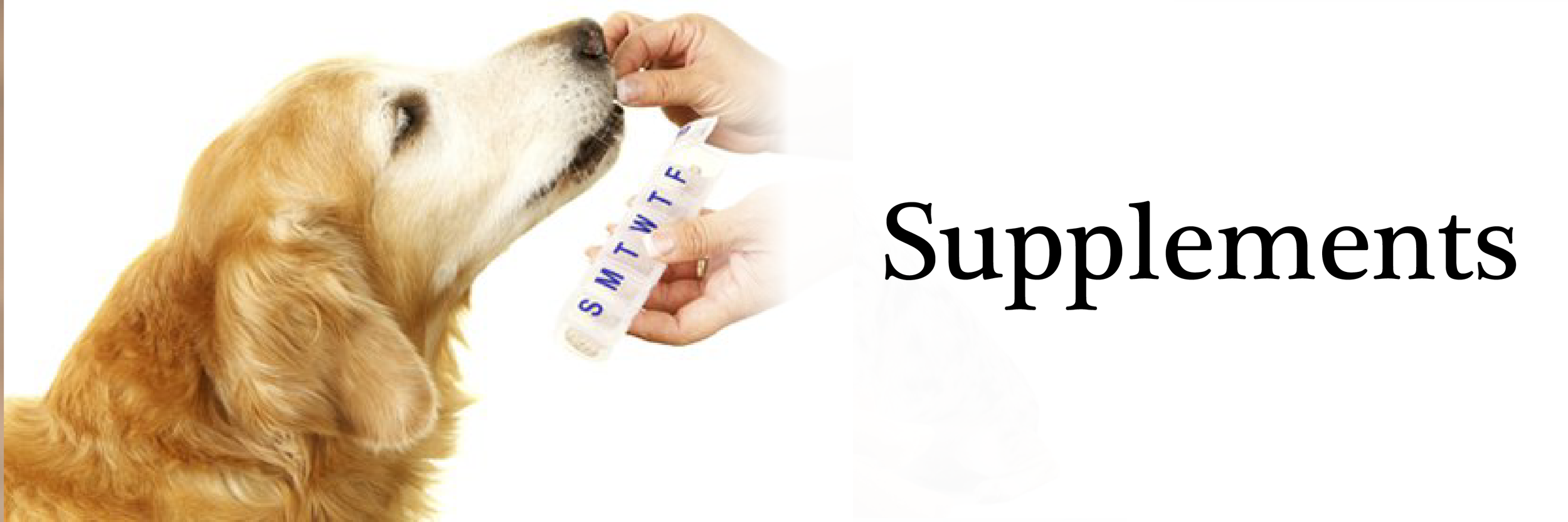 supplements banner-01.png