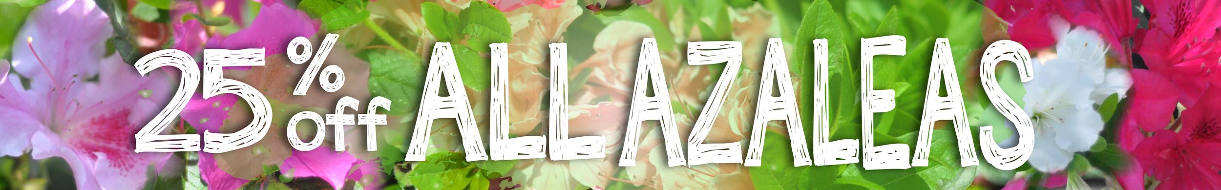 azalea sale-01-01.png