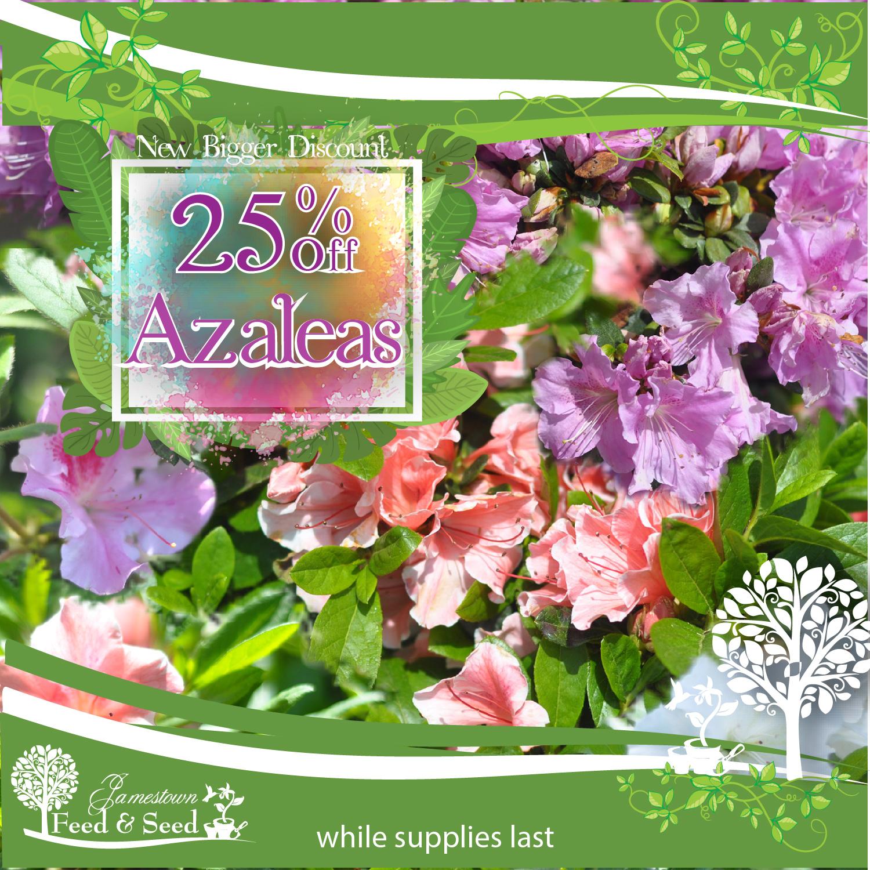 azalea sales-01.jpg