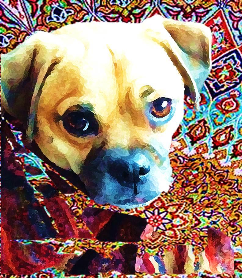 puppy8.jpg