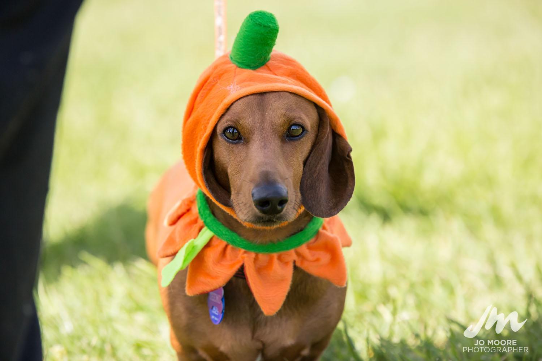Dashie Halloween-10.jpg