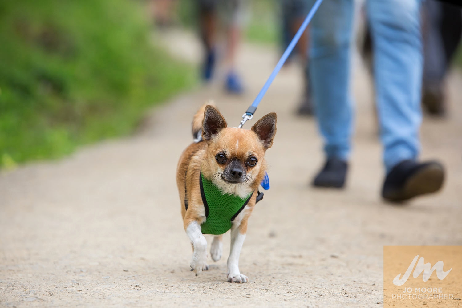 Paws in the Park-68.jpg