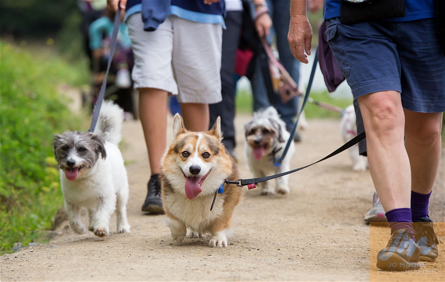 Paws in the Park-73.jpg