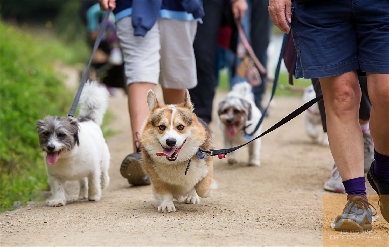 Paws in the Park-74.jpg