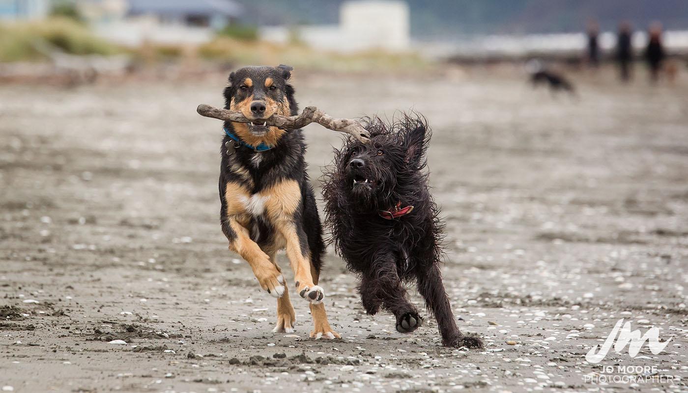 Porirua Dog Lovers-4.jpg