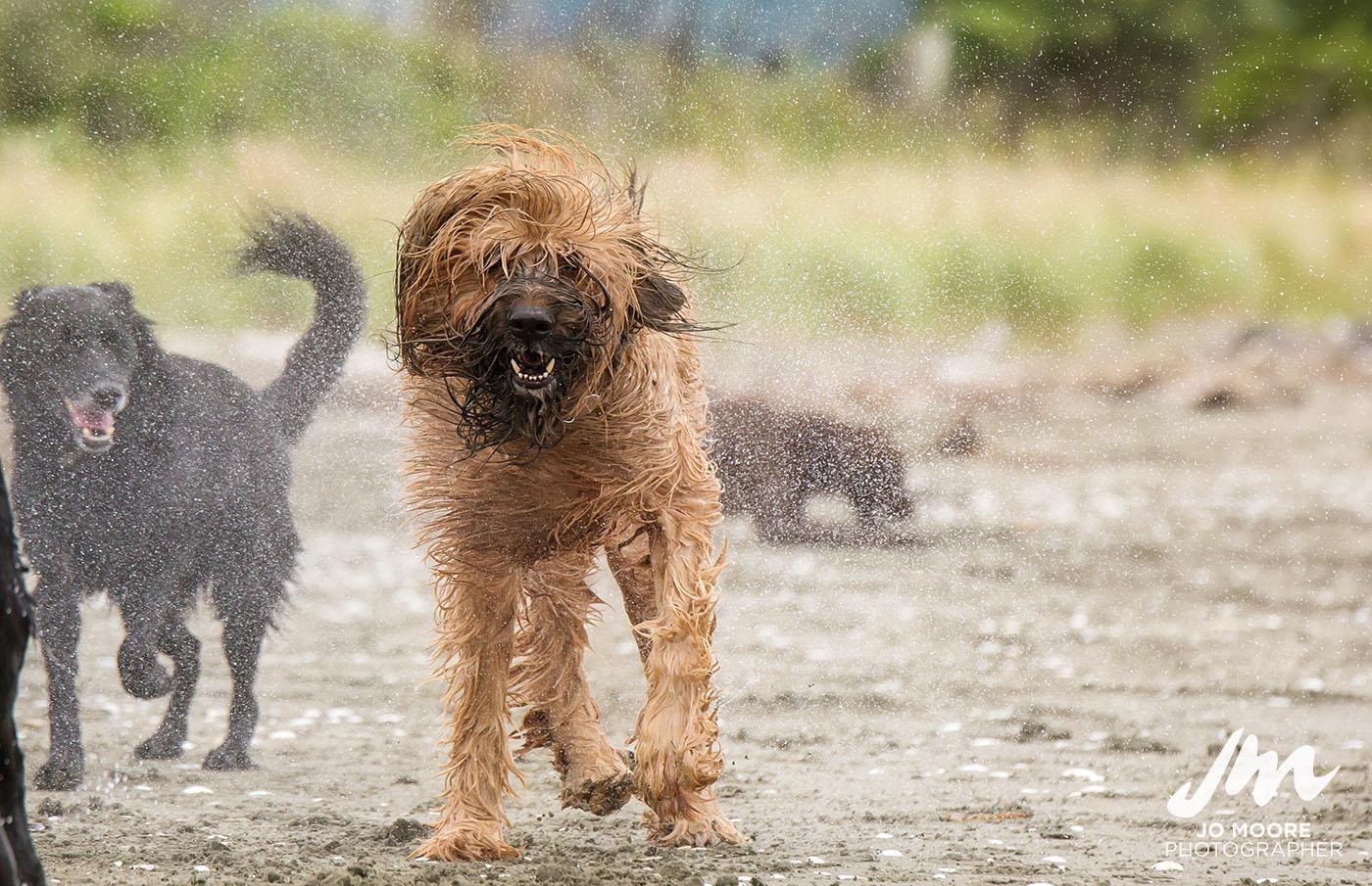 Porirua Dog Lovers-6.jpg