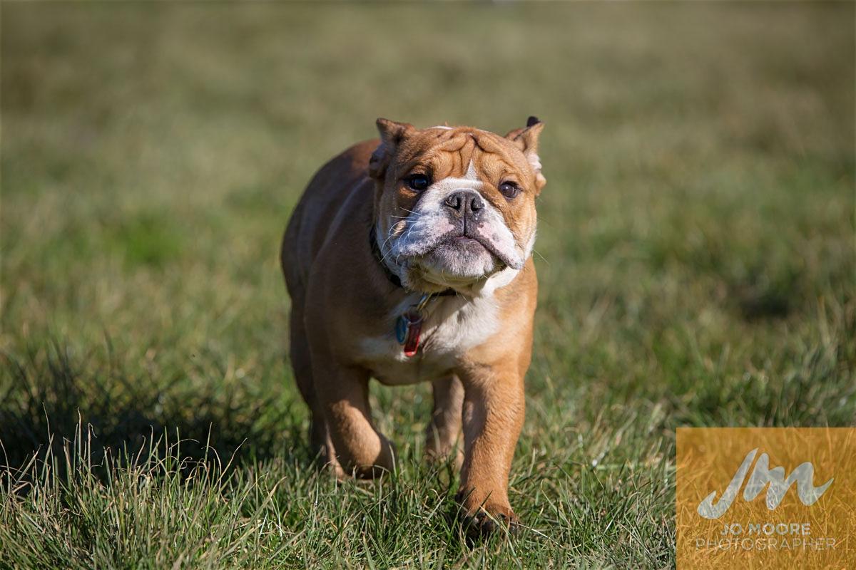 Bulldogs-25.jpg