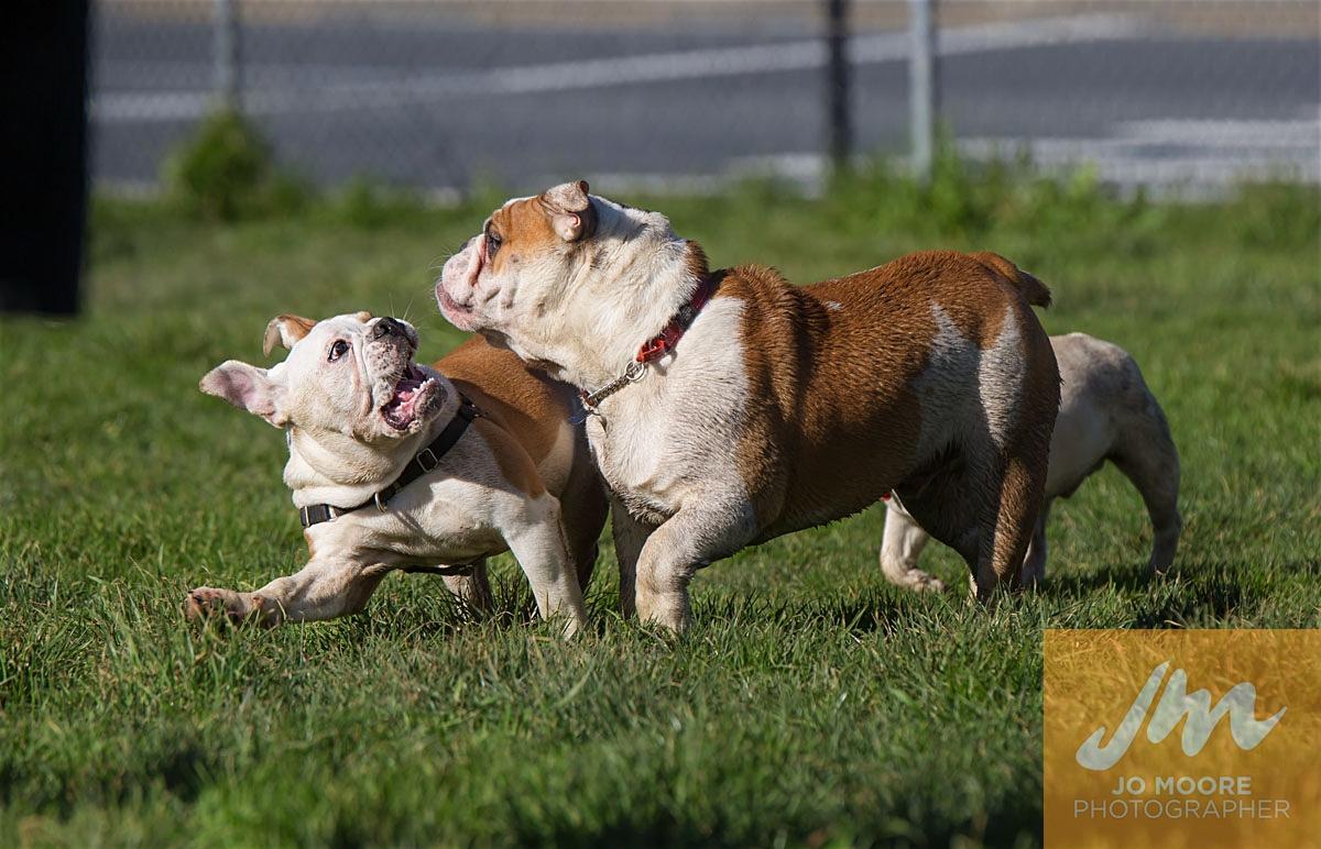 Bulldogs-28.jpg
